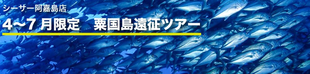 4〜7月限定 粟国島遠征ツアー