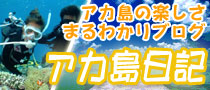 阿嘉島ブログ