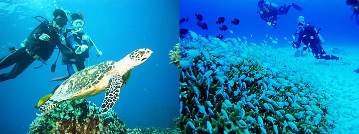阿嘉島の海、ダイビング