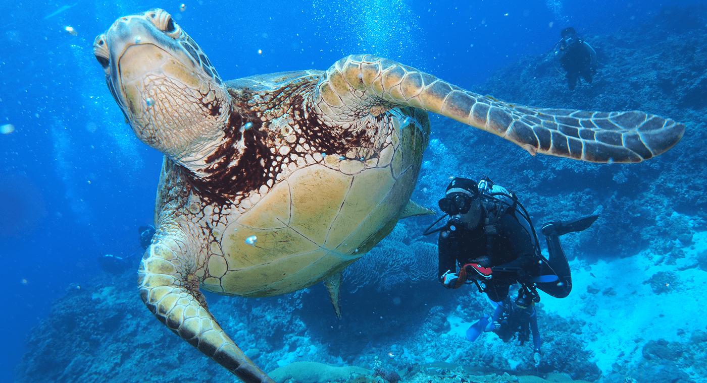 ダイビングする Diving