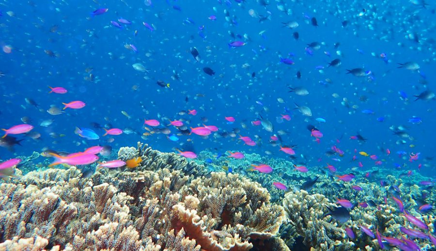2本目、ペスカトーレ島でのダイビング