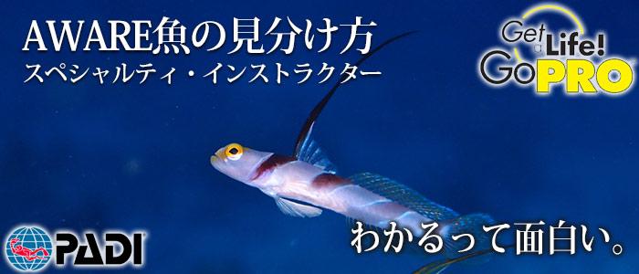 AWARE魚の見分け方