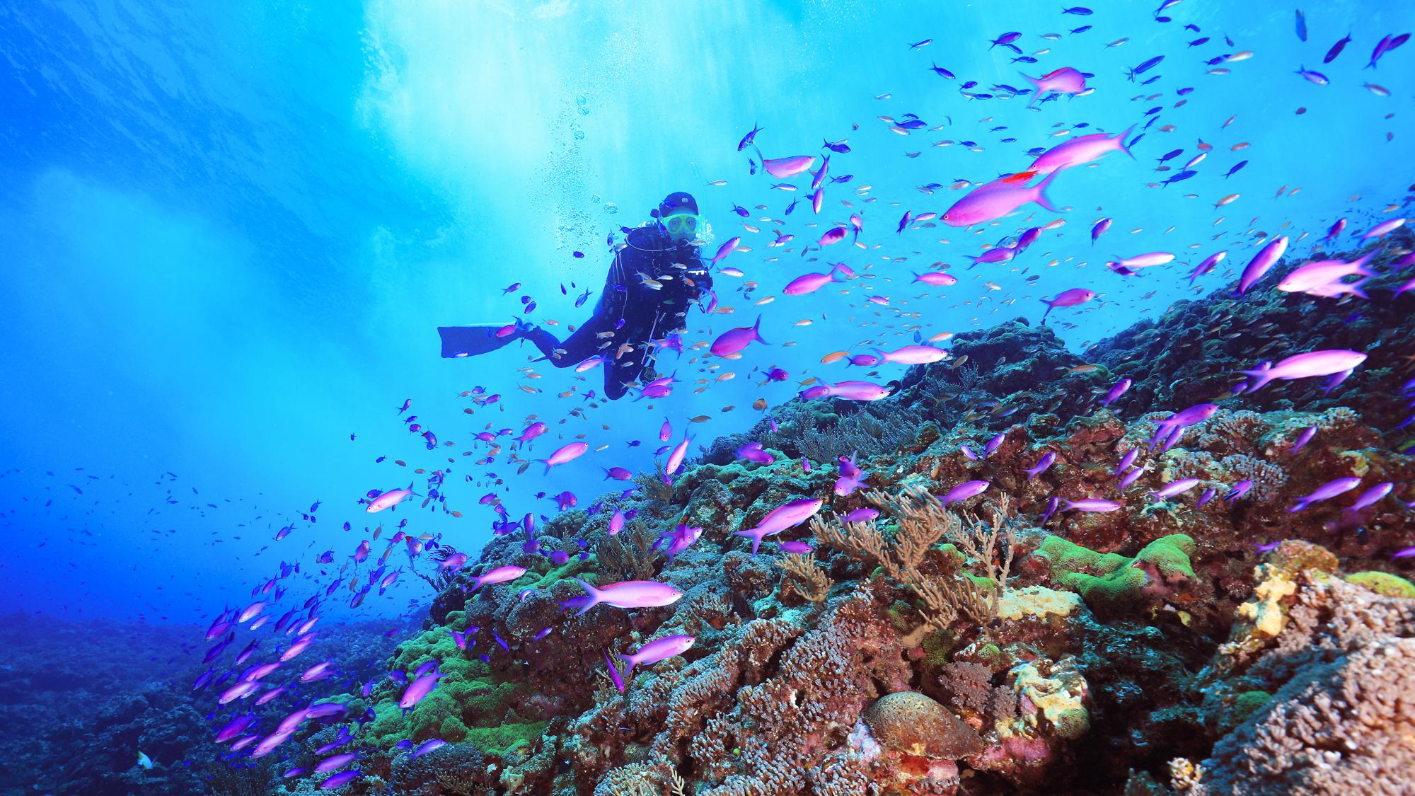 Diving tour at the Tonaki islands in Okinawa