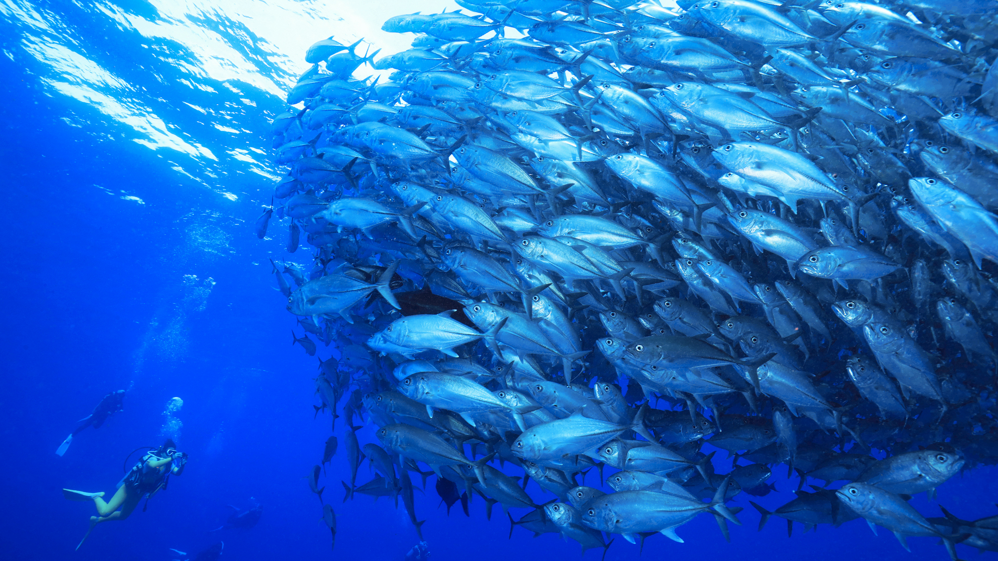 Drift diving at the Kerama islands in Okinawa