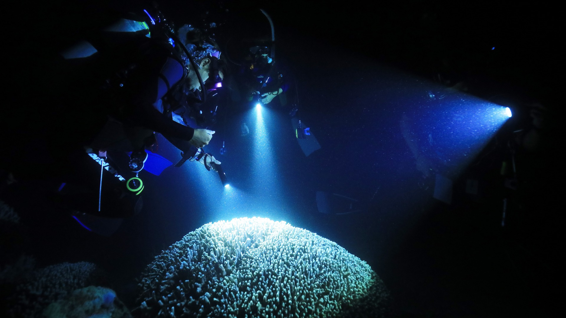 diving in the night