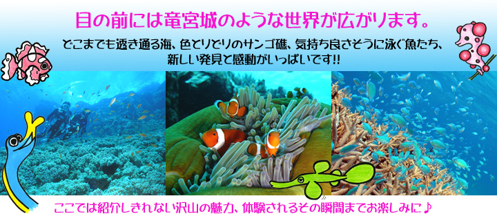 慶良間水中世界