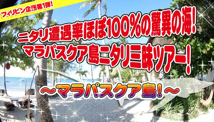ニタリ遭遇率ほぼ100%の驚異の海!マラパスクア島!