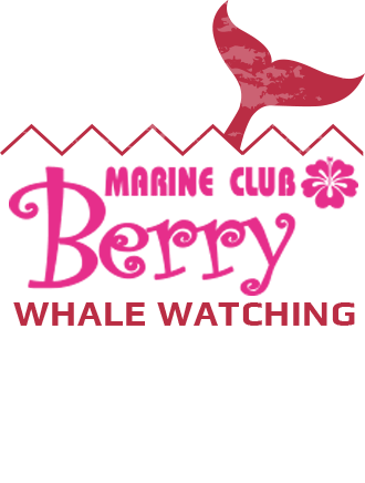 SEASIR WHALE WATCHING