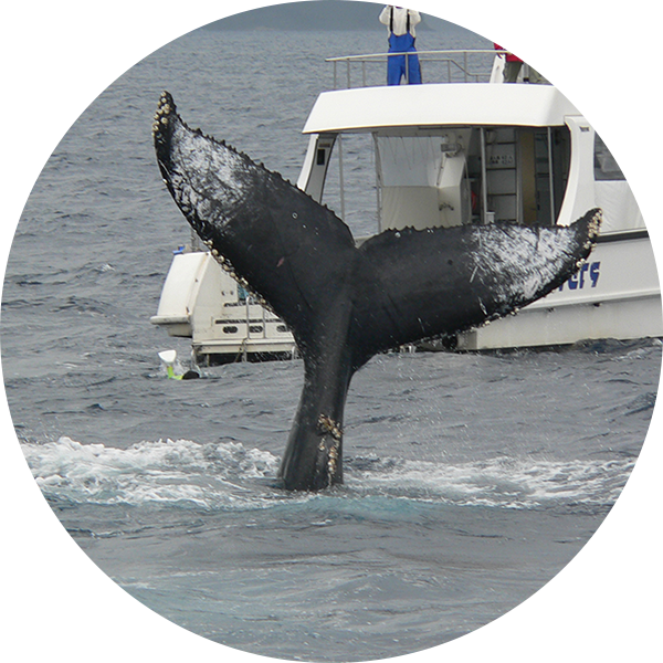 whale-image